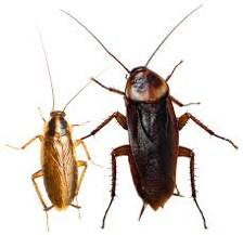 Miller's Pest Control - Signs of Cockroach Infestation